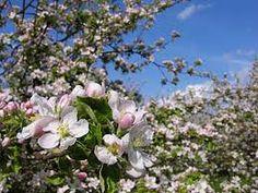 blommor trädgård - Google Search