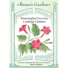 Renee's Garden Cardinal Climber Vine (Heirloom) - Flower Seeds - Seeds