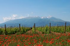 Marramiero wine. Emotions of Abruzzo (Italy)