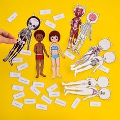 Study the human body anatomy with kids by making a set of printable anatomy paper dolls, with each layer showcasing a different body system! School Psychology, Psychology Facts, Biceps, Human Body Anatomy, Anatomy Models, Human Body Systems, Paper Dolls Printable, Printable Crafts, Dress Up Dolls