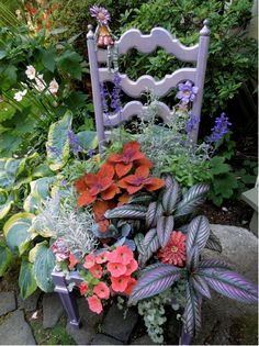 Amazing Gardens, Beautiful Gardens, Beautiful Flowers, Persian Shield Plant, Chair Planter, Tropical Plants, Purple Plants, Container Flowers, Garden Chairs