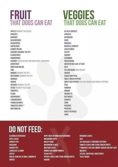 what fruits can dogs eat a list - Google Search