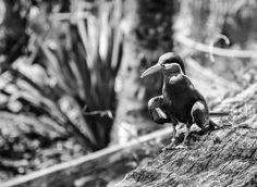 DSC_4001.jpg - bird in zoo