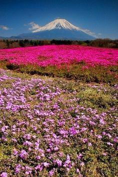Гора Фудзияма – это не просто самый красивый конусный вулкан в мире, а обожаемый всеми японцами символ страны, встречающийся во многих путеводителях, журналах, марках и открытках.