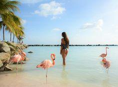Aruba Island. Travel girl.