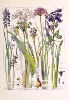 Wild Flowers of the British Isles. Botanical, card, nature, illustration, vintage, flowers