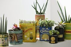 Urban Jungle Bloggers – Plant Gang, an Upcycling project
