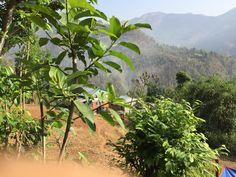 It my beautiful village Ruru Gulmi Tharobato Nepal Yam subedi 😘😘😘🏘