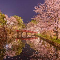 """青森県にある「弘前公園(ひろさきこうえん)」。豪華に咲き誇るソメイヨシノがとても美しく、また川に散った桜が生み出す幻想的な""""桜のプール""""も一見の価値がある絶景スポットです。"""