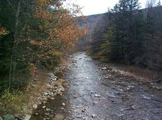 Mohawk Trail State Forest MA
