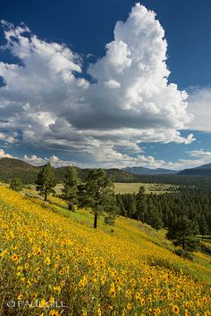Sunset Crater National Monument, Arizona; photo by Paul Gill
