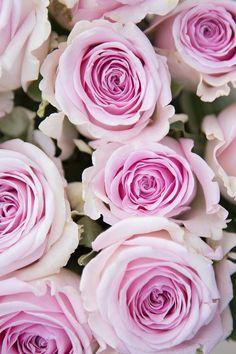 Beautiful Flowers Photos, Flower Photos, Beautiful Roses, Love Rose Flower, Pretty Flowers, Purple Flowers, Pink Roses, Lilies Drawing, Shabby Flowers