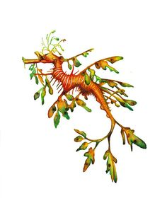 In love with this painting! Leafy Sea Dragon painting print 8 x 10 by CindyLane on Etsy, $20.00 Seahorse Painting, Seahorse Art, Seahorses, Dragon Seahorse, Seahorse Drawing, Ocean Creatures, Fantasy Creatures, Mythical Creatures, Weedy Sea Dragon