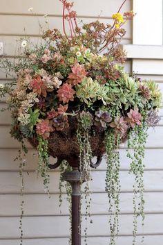 Succulents! old floor lamp repurposed! Beautiful!