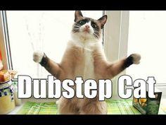 Cat's Dubstep Music Dance