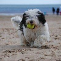 #dogalize Giochi per cani all'aperto: quali sono i migliori? #dogs #cats #pets