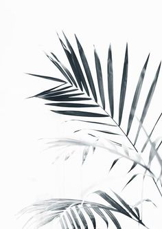 This printable wall art is High Resolution. Palm Leaves Palm Tree Black and white photography Printable wall art Scandinavian decor. B&w Wallpaper, Tree Wallpaper Iphone, Drawing Wallpaper, Black And White Wall Art, Black And White Painting, Tree Wallpaper Black And White, Black And White Posters, Black And White Background, Black Tree