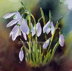 Ann Mortimer's Painting Blog: DVD now available on Amazon