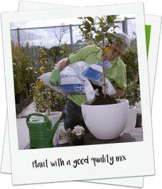 How to grow citrus in a pot video - Palmers Garden Centre http://www.palmers.co.nz/secrets-garden-success/zest-for-success-growing-citrus-in-a-pot/