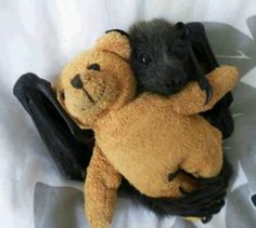 Baby Bat with stuffed toy