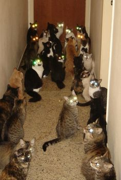 Weird! Never imagined I would think a group of cats was creepy....