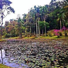 Jardim Botânico SP