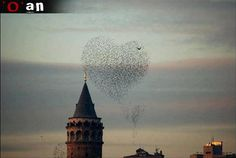 A cluster of love_ birds flapping in Eminonu,İstanbul...