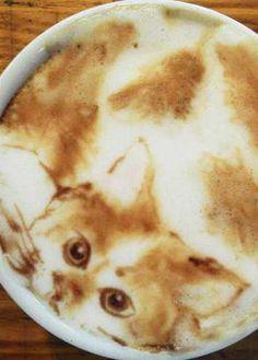 so amazing  the cat on  Latte
