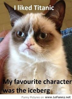 Grumpy cat loves Titanic   Funny Pictures   Funny Quotes   Funny ...