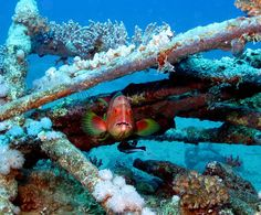 Coral #Grouper by Colin's Camera