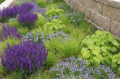 Amsonia Blue Ice, Salvia Wesuwe , Sesleria autumnalis, Schizachyrium scoparium Carousel https://www.facebook.com/photo.php?fbid=10203918172531328