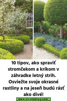 10 tipov, ako spraviť stromčekom a kríkom v záhradke letný strih. Osviežte svoje okrasné rastliny a na jeseň budú rásť ako divé! Oahu, Country Roads, Fotografia