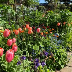 It's Cottage Garden heaven at The Cottages this Spring with the tulips giving their all, it gladdens the heart.