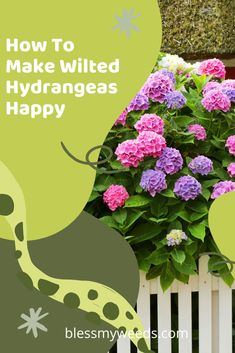 Everybody loves hydrangeas until they start to wilt. Then nobody is happy. Learn tips and tricks to revitalize wilted hydrangeas. Easy tips that anybody can do. Read the post to learn more about these beautiful flowers and how you can keep them happy looking. #gardens #blessmyweedsblog #flowers #hydrangeas Big Flowers, Purple Flowers, Spring Flowers, Beautiful Flowers, Hydrangea Care, Hydrangeas, Wilted Flowers, Gutter Garden, Organic Gardening Tips