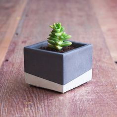 "Color Block Concrete Planter 3"" Square, Charcoal and White $23 Charcoal grey with painted white stripe. 3 ¾"" long, 3 ¾ "" wide, 3"" tall"