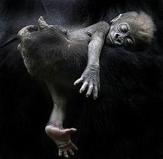 Resultado de imagem para mother and baby animals