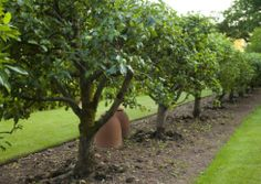 Might be a nice way to plant an orchard of various fruit trees. The English Garden magazine's home garden of Stockton Bury in Herefordshire