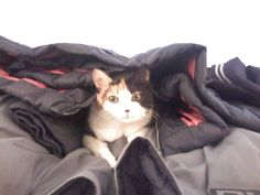 Tasha's favorite place ever. Nuzzled under a pile of jackets!