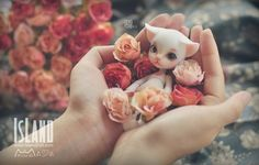 An An, 10.5cm Island Doll (Forest Island) Pet Doll - BJD Dolls, Accessories - Alice's Collections