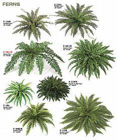 5 planters (indoor terrarium) - Different kinds of indoor fern. Indoor Fern Plants, Vertical Garden Plants, Potted Ferns, Ferns Garden, Shade Garden Plants, Faux Plants, Outdoor Plants, Hanging Plants, House Plants