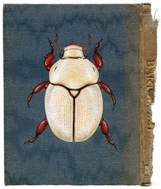Rose Sanderson white scarab