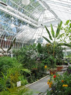 Westmount's Conservatory and Greenhouses (2) by Quevillon, via Flickr