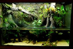 My 300g DIY paludarium - Paludariums - Aquatic Plant Central