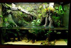 My 300g DIY paludarium - Paludariums - Aquatic Plant Central
