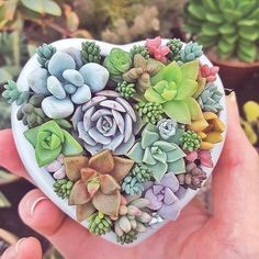Lots of love for succulents (Photo: succulents.ireland)