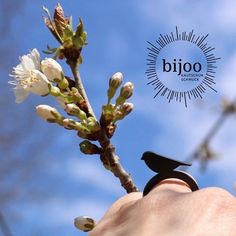 🐦Birds are singing in blooming trees 🌸 - spring is beautiful! #spring #birdring #bird #blackring #spring #frühling #vogel #bijoo #kutschukschmuck #naturalrubber Blooming Trees, Natural Rubber, Black Rings, Class Ring, Birds, Beautiful, Spring, Schmuck, Flowering Trees