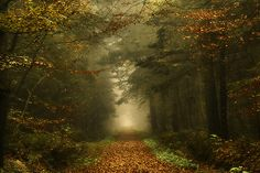 Eindeloos by Oer-Wout
