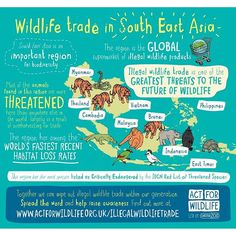 South East Asia is an important region for biodiversity. Most of the animals found in this region are more threatened here than anywhere else in the world, largely as a result of overharvesting for trade. This region is the global supermarket of illegal wildlife products.  Together we can wipe out illegal wildlife trade within our generation. Spread the word and help raise awareness.  Find out more at www.actforwildlife.org.uk/illegalwildlifetrade  #traffic #illegalwildlifetrade…