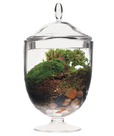 terrarium @Sarah Flory - this looks cool! lets get a jar like this when we get more moss at joanns!