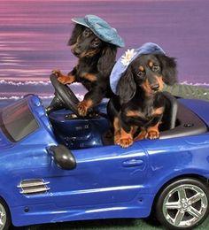 ...Headed to Pet Smart...